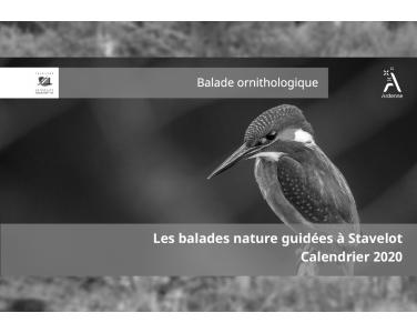 Balades Nature Guidées - Balade ornithologique
